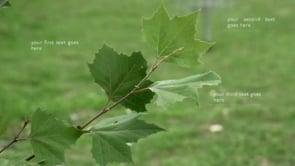 Tree Branch Text